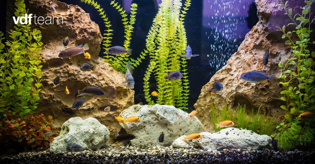 equip d'osmosis per aquaris